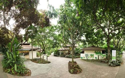 Halia, Singapore Botanical Gardens